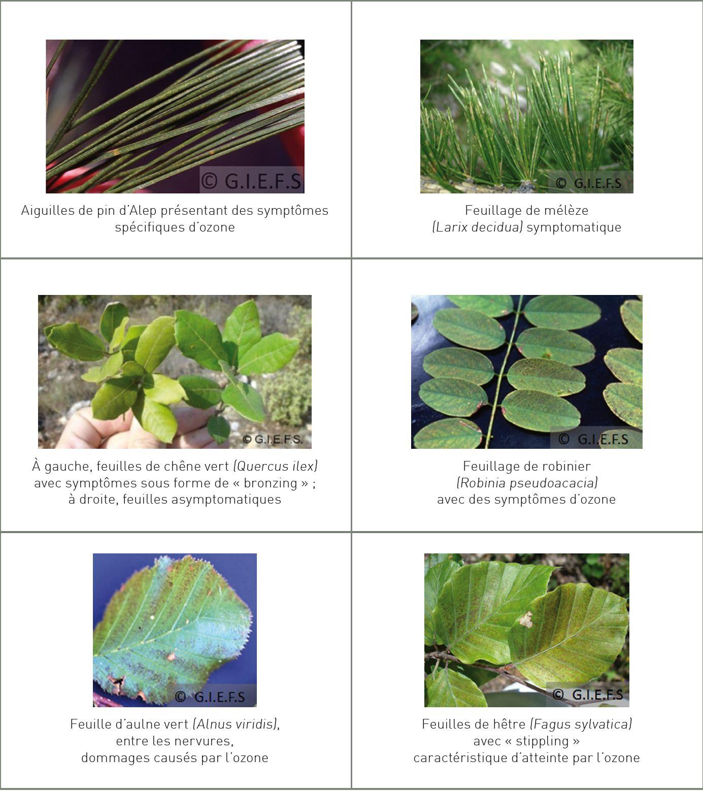 Hauteur 160 mm 10 crédits verts feuillus