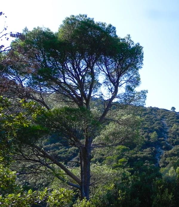 Journée d'échanges : la forêt méditerranéenne face au changement climatique