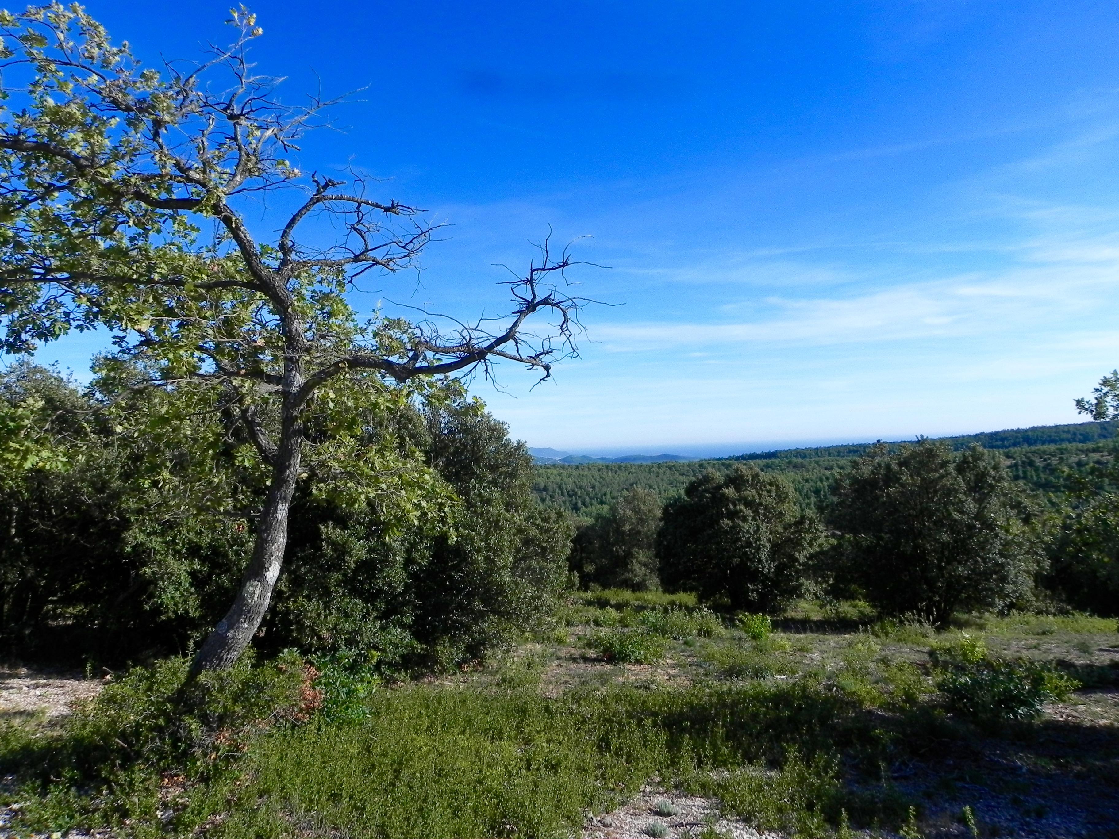 Webinaire - Effets de la pollution de l'air et du changement climatique sur les forêts méditerranéennes